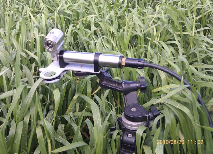 Shutter Fluorometer measuring wheat photosynthesis at Narrabri