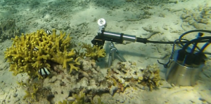Shutter Fluorometer and hard coral