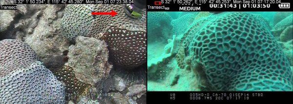 Aquation Classic Ethernet Fluorescence Sensor on Coral